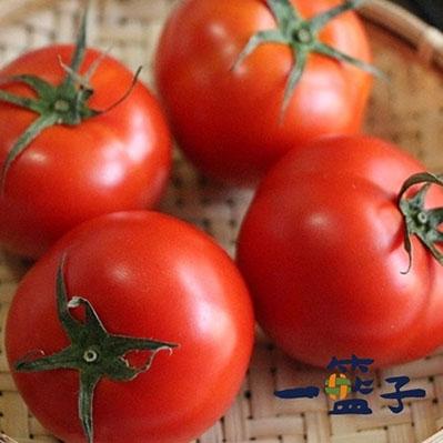 一籃子.預購 新社牛番茄5斤