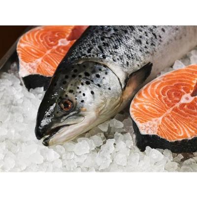 PG CITY鮮食館 智利冷凍全鮭魚切片 Salmon 3公斤裝 嚴選海鮮