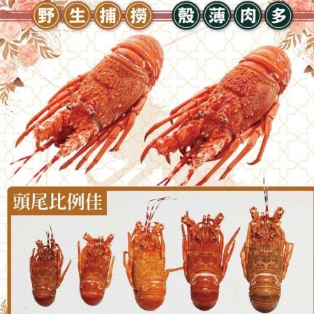 火星王子 野生熟凍龍蝦 每隻只要199元 限時限量下殺