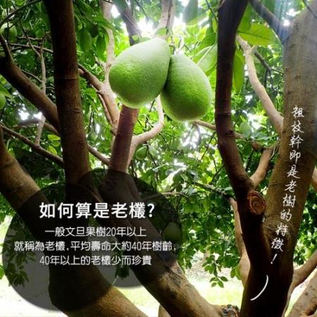 【預購-產地直送】正宗麻豆40年老欉文旦禮盒5斤4-6顆(x2箱)