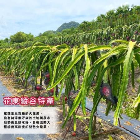 【預購-產地直送】花東縱谷特產雙色火龍果10斤17-20顆(x1盒)